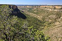 A view of Navajo Canyon near Square Tower House.  Mesa Verde National Park.  Colorado,  USA.