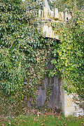 Doorway with old oak door to secret garden hidden by overgrown climbing shrubs and leaves, The Cotswolds, UK