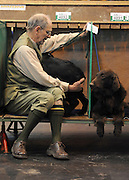 ©London News pictures. 10/03/11. An exhibitor waits for a show to start Exhibitiors and their dogs at Crufts 2011 held at The National Exhibition Centre in Birmingham today (Thurs). The show runs from 10 - 13 March 2011 Picture Credit should read Stephen Simpson/LNP