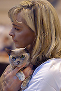 © Licensed to London News Pictures. 24/11/2012. Birmingham, UK Cats are shown by their owners and breeders at The Supreme Cat Show held by the Governing Council of Cat Fancy at the National Exhibition Centre in Birmingham today, 24 November 2012. The Cat Show is one of the largest cat contests in Europe with over one thousand cats being exhibited and judgedPhoto credit : Stephen Simpson/LNP