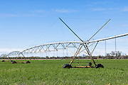 Mobile lateral move irrigation boom system in field near Inglewood, Queensland, Australia.