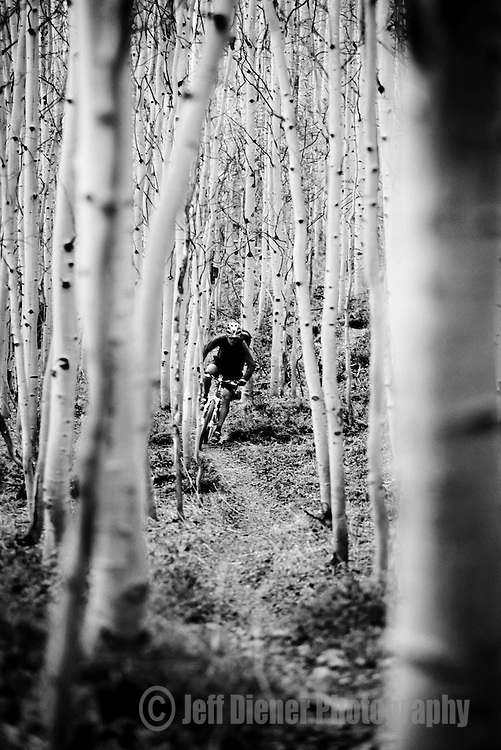 A mountain biker rides through an Aspen grove near Crested Butte, Colorado.