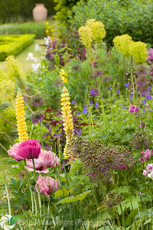 Lupins, poppies, geraniums and euphorbias are just some of the plants in this border in the Pool Garden at Abbeywood Gardens, Cheshire - photographed in June