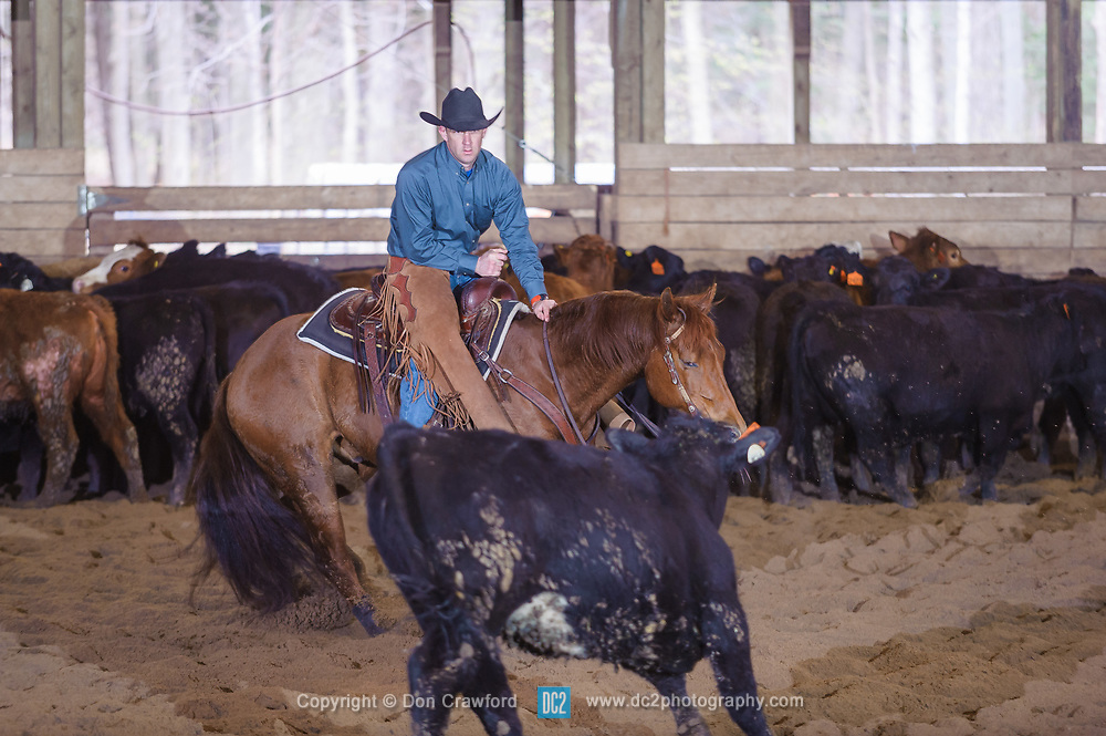 April 30 2017 - Minshall Farm Cutting 2, held at Minshall Farms, Hillsburgh Ontario. The event was put on by the Ontario Cutting Horse Association. Riding in the Non-Pro Class is Jason Gorringe on Top Gun Memorial owned by the rider.