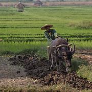 Myanmar - Burmese Agriculture