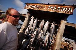 07 May 2010. Venice, Louisiana. Deepwater Horizon, British Petroleum environmental oil spill disaster.<br /> Captain Peace marvel, a sport fishermen guide lands yellow fin tuna and other predator species caught to the west of the giant BP oil spill. Nobody is sure how much longer they will be able to catch fish in the region. Charter boat captains, rental camps and hotels are reporting mass cancellations of fishing trips and other vacations to the Gulf  Coast region.<br /> Photo credit;Charlie Varley/varleypix.com