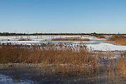 Noah's Lake at Shapwick Heath following heavy snow and freezing conditions.