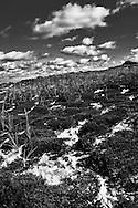 Cape Cod 2013
