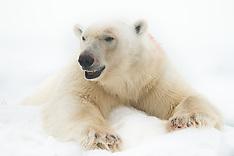 Svalbard #22 2014