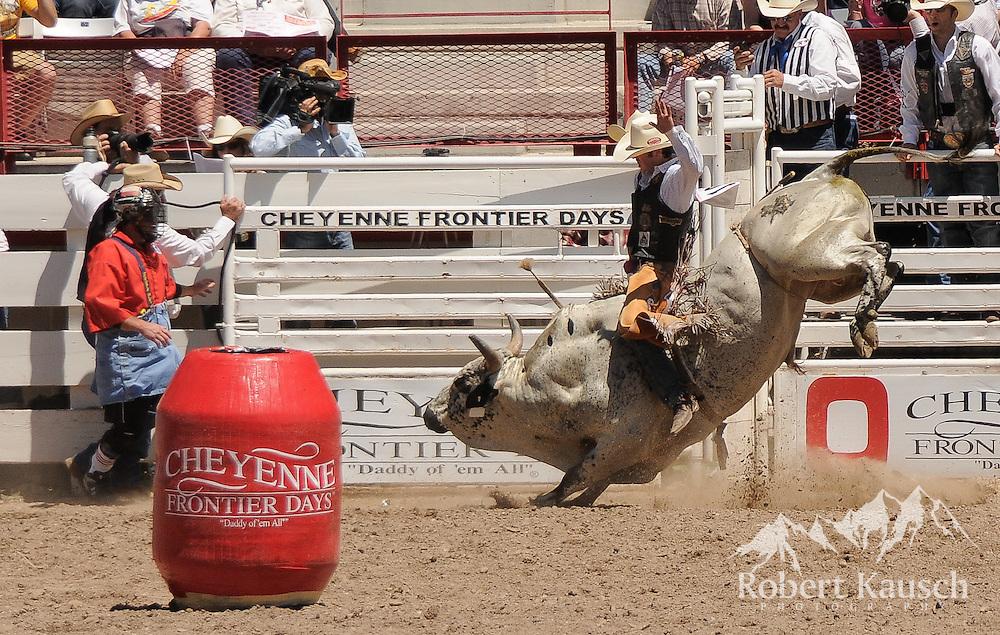 Bull rider at work.