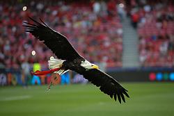 September 12, 2017 - Lisbon, Lisbon, Portugal - Benficas eagle mascot during the SL Benfica v CSKA Moskva - UEFA Champions League round one match at Estadio da Luz on September 12, 2017 in Lisbon, Portugal. (Credit Image: © Dpi/NurPhoto via ZUMA Press)