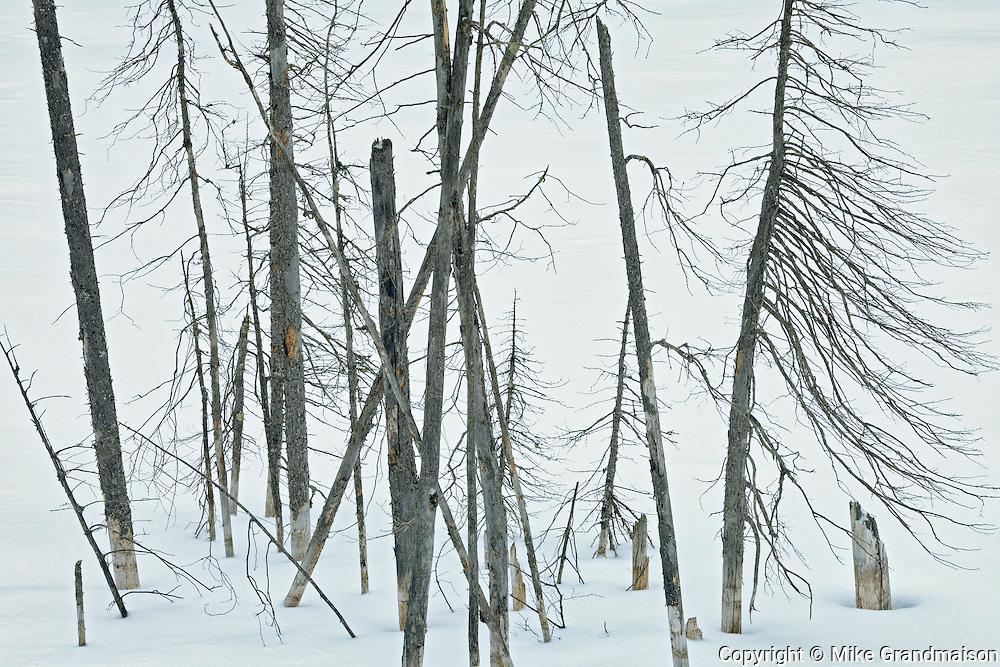 Trees in winter<br /> Nipiwin<br /> Saskatchewan<br /> Canada