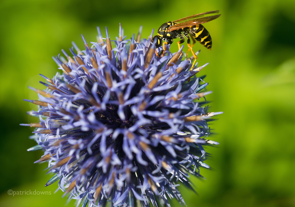 Wasp & Thistle—sounds like a Scots pub maybe ;)