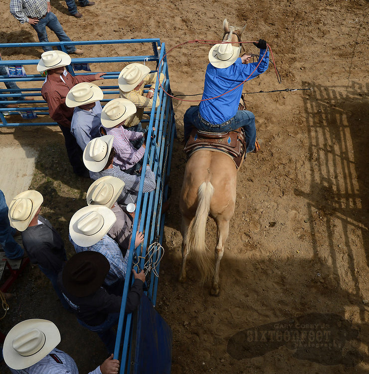 Photo by Gary Cosby Jr.     Cowboys and cowgirls compete in the Limestone Sheriff's Rodeo Slack Day Thursday in Athens.  Cowboys watch as a competitor leaves the gate during the calf roping event.