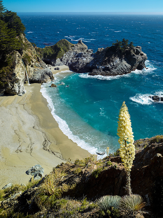 Yucca Bloom and waterfall at McWay Cove, Julia Pfeiffer State Park, Big Sur