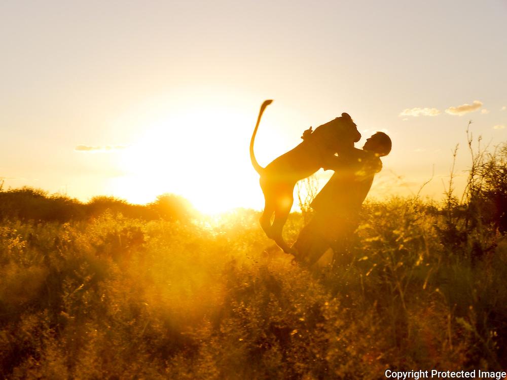 Valentin Gruener, Sirga, lioness, hand raised, kalahari, Botswana, Private Game Reserve, sunset
