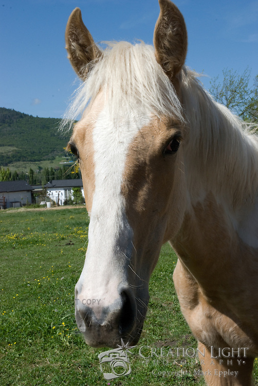 Horses are graceful, intelligent creatures.  Most captive horses are very friendly with humans.  There are many farms in southern Oregon of which many have horses.
