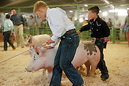 Carter Watsabaugh, 10, guides Turbo during the 4H Swine Showmanship junior competition on Thursday. This is Watsabaugh's second year raising pigs for Teton County Fair.