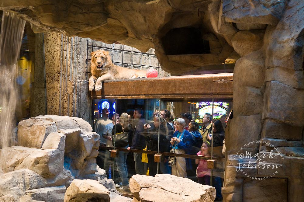 Lion Habitat at the MGM Grand Hotel, The Strip, Las Vegas, Nevada, USA