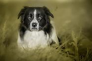 Dogslife rural