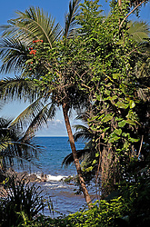 View of Onomea Bay from an ocean-front trail at the Hawaii Tropical Botanical Garden, a 37-acre nature preserve and sanctuary on scenic drive loop of Highway 19 north of Hilo.