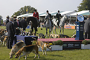 The Hound parade. The Land Rover Burghley Horse Trials. 4 September. ONE TIME USE ONLY - DO NOT ARCHIVE  © Copyright Photograph by Dafydd Jones 66 Stockwell Park Rd. London SW9 0DA Tel 020 7733 0108 www.dafjones.com