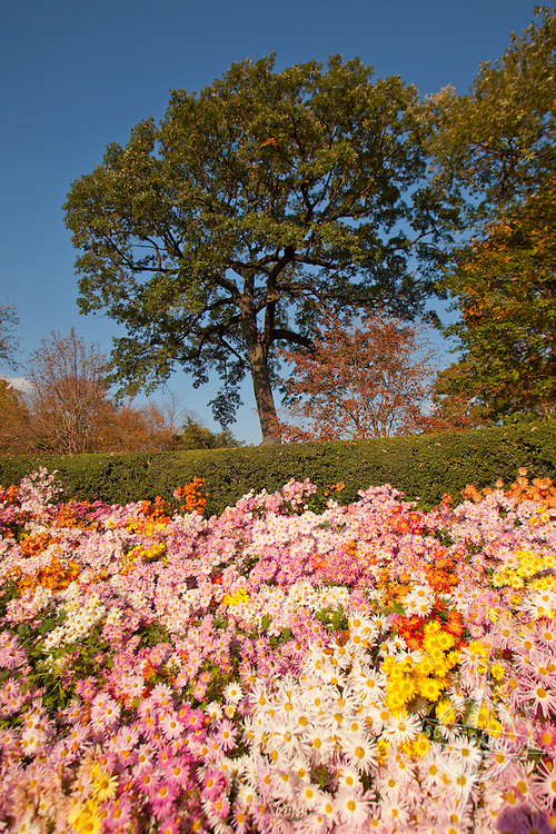 The Conservatory Garden in Central Park, NYC. Fall colors. The French Garden.