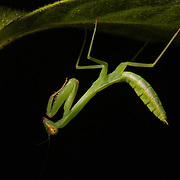 Palawan - Invertebrates