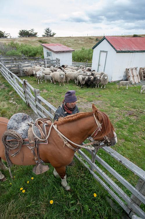 Gaucho and horse, Estancia rio verde, chile
