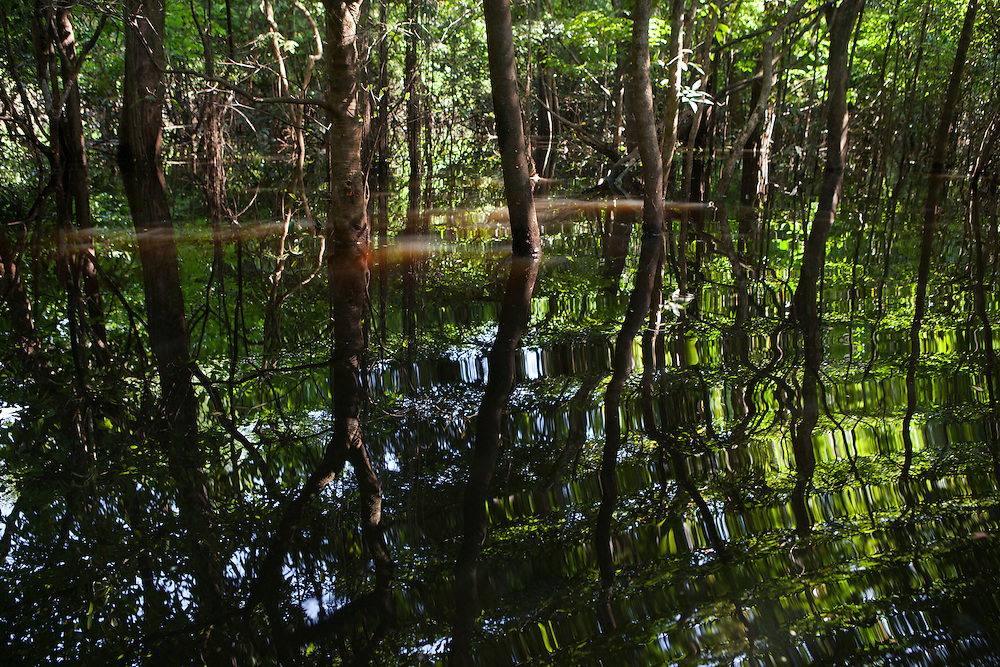Flooded forest in the Amazon, Brasil.