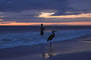 Indian Shores, Florida. USA. General View, Sunset. sky lite by the sun under  the horizon. Fisherman accompanied, by a Heron. Gulf Mexico,<br /> <br /> Friday  28/10/2011<br /> © Peter SPURRIER<br />  <br /> <br /> NIKON - COOLPIX P7000 - 1/104 - f3.5  3.4MB MB