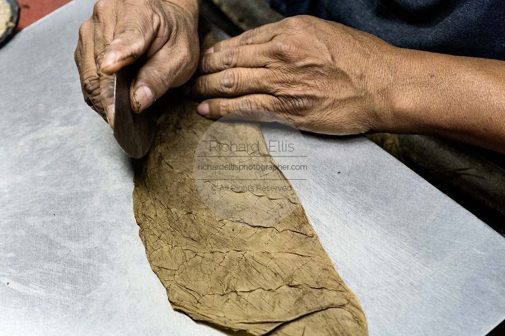 A master cigarmaker called a torcedor begins the process of hand rolling a fine cigar at the Santa Clara cigar factory in San Andres Tuxtlas, Veracruz, Mexico. The factory follows traditional hand rolling using the same process since 1967 and is considered by aficionados as some of the finest cigars in the world.