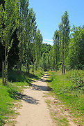 Avenue of poplar trees on Sissinghurst castle estate, Kent, England, UK