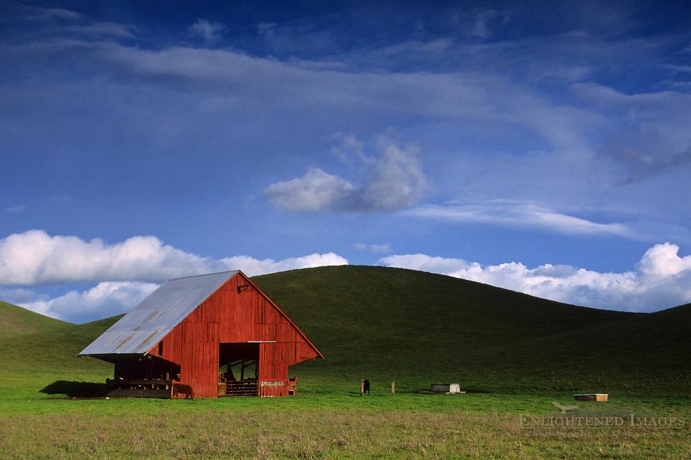 Barn and green pasture Tassajara region, Contra Costa County, CALIFORNIA
