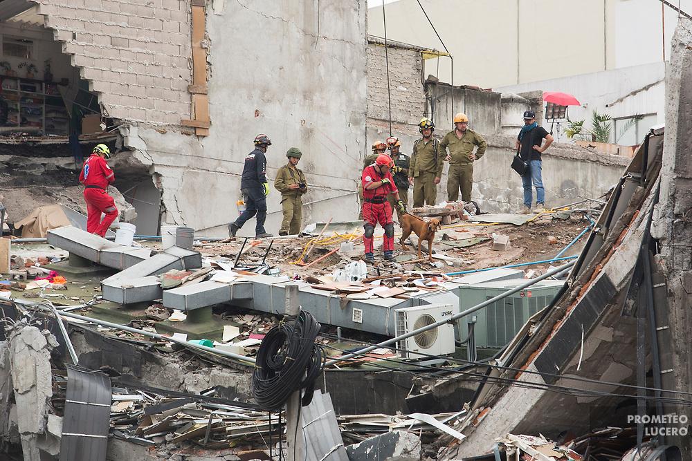 Rescatistas mexicanos e israelíes en Alvaro Obregón 286, Ciudad de México. 21 de septiembre de 2017  (Foto: Prometeo Lucero)