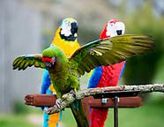 Lego macaws zsl whipsnade Zoo