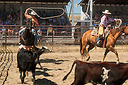 Wilsall Ranch Rodeo, Montana, Team Branding, CA Ranch Team