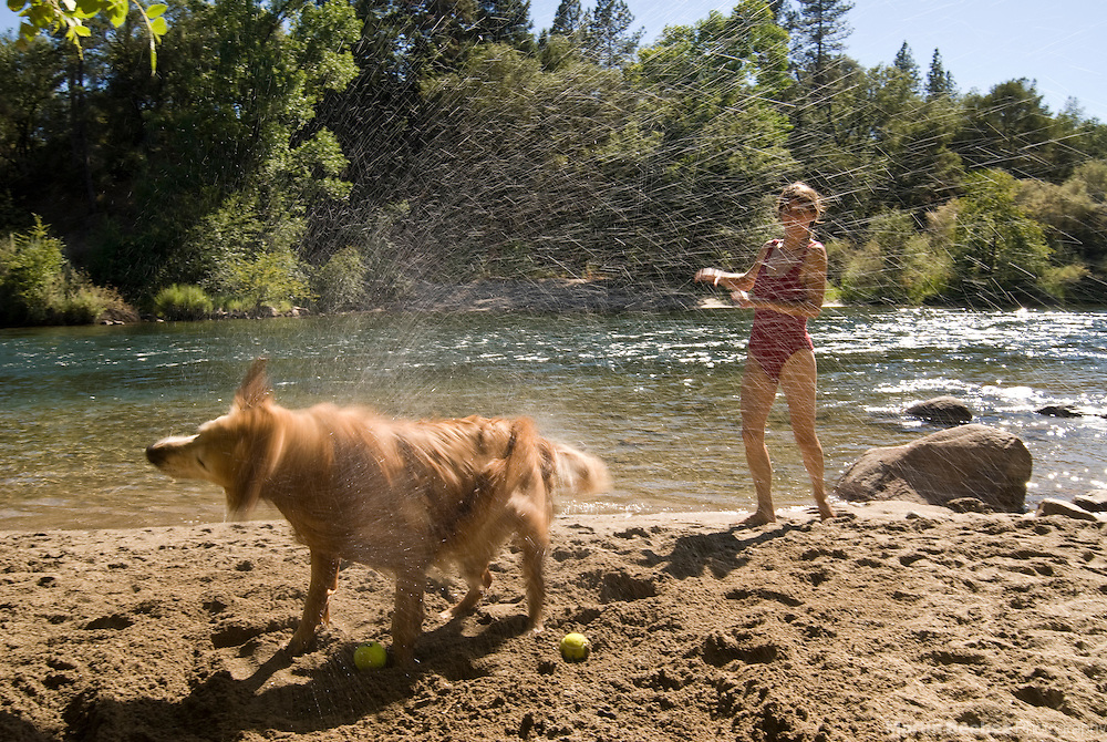 A golden retriever shakes off next to the South Fork American River, California
