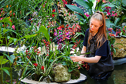 © Licensed to London News Pictures. 06/02/2020. London, UK. Kew apprentice JENNY CRABB applies the final touch to Orchids during press preview of the 25th Kew Orchid Festival at Kew Royal Botanical Gardens. This year's theme is around the wonders of Indonesia and the festival runs from 8 February to 8 March 2020. Photo credit: Dinendra Haria/LNP
