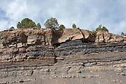 coal beds in the Late Cretaceous Vermejo Formation, near Trinidad, Colorado