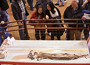 SWEETWATER, TX - MARCH 14: Spectators view processed western diamondback rattlesnake skins during the 51st Annual Sweetwater Texas Rattlesnake Round-Up, March 14, 2009 in Sweetwater, Texas. Approximately 24,000 pounds of rattlesnakes will be collected, milked for venom and the meat served to support charity. (Photo by Richard Ellis)