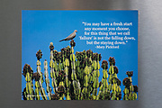 Photo magnet with dove, Mary Pickford quote, cactus, blue sky, words to inspire, Santa Monica, California, home art, fridge art, Los Angles, Southern CA.