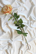 Silk flower on white background