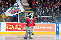 KELOWNA, CANADA - JANUARY 16: Rocky Racoon, the mascot of the Kelowna Rockets waves a flag on the ice against the Seattle Thunderbirdson January 16, 2015 at Prospera Place in Kelowna, British Columbia, Canada.  (Photo by Marissa Baecker/Shoot the Breeze)  *** Local Caption *** Rocky Racoon, mascot;