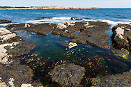 July 12, 2012: Day 2 in Stockton Springs, Schoodic Point, and Prospect Harbor, ME.