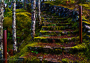 An abandoned stairway leading up from Sooke River above Potholes Provincial Park. Vancouver Island BC.