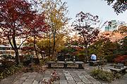 Tokyo, Roppongi - Automn colors in Roppongi midtown garden