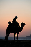 essaouira, morocco, camel on the beach at sunset in sillouette