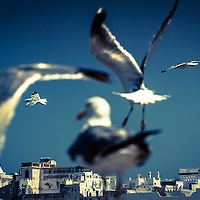 Where: Essaouira, Morocco. A great shot of the seagulls with eh old city in the background.