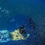 Whale shark (Rhincodon typus) with tourist and shoal of red fish evading predation, Honda Bay, Palawan, the Philppines